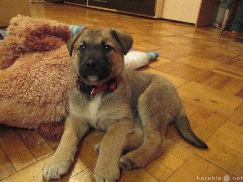 Отдам даром щенка в тамбове объявление август 2011 частные объявления о продаже земельных участков в московской области4kg