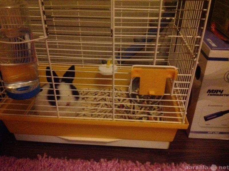 Приму в дар Клетку для кролика
