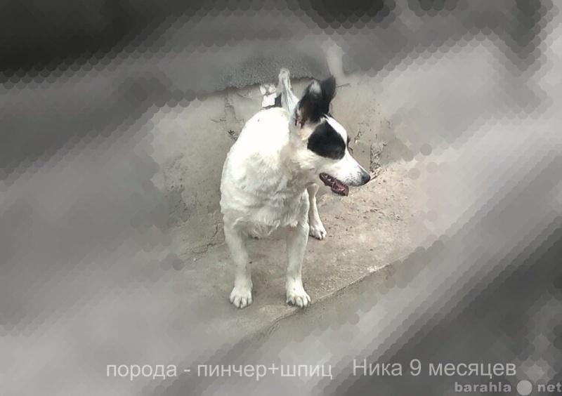 Продам продам щенка от меленьких собак