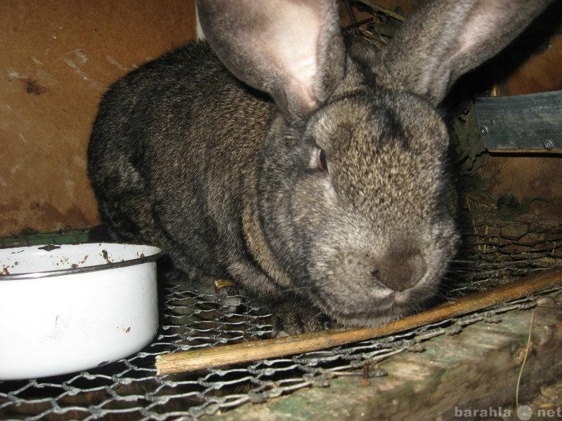 Продам продам кроликов