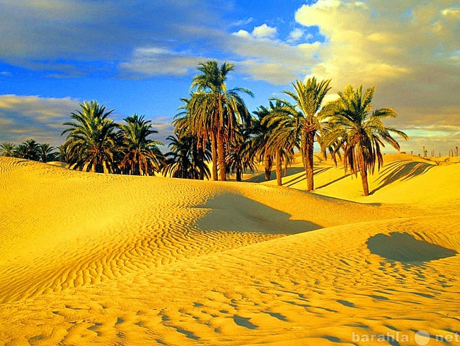 Продам Песок речной,песок карьерный,песок валом