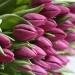 Продам цветы с доставкой