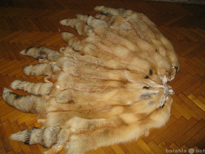 Продам Шкуры рыжей лисы.
