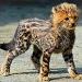 Продам Котята крупных кошек из частного питом