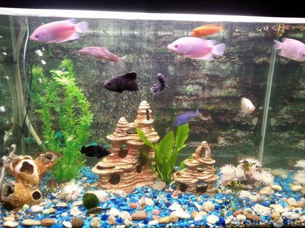 Продам Аквариум 500литров с рыбами