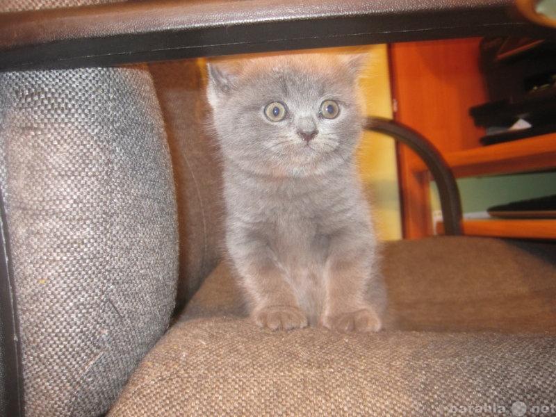 Куплю продам котёнка