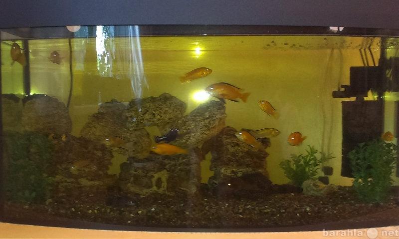 Продам Продам готовый аквариум с полкой,