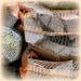Продам Дрова сухие камерной сушки
