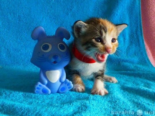 Продам Предлагаются котята к бронированию