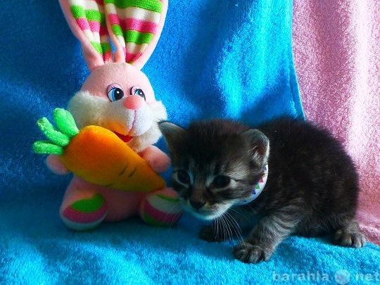 Продам Котятат от домашней кошки