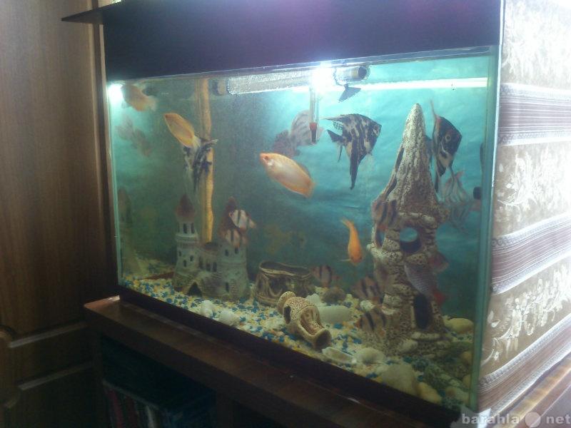 Продам аквариум 80 литров с рыбками и тумбой