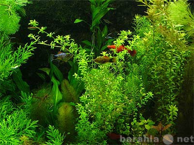 Продам: аквариум 35 литров с оборудованием