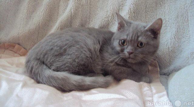 Продам: котенок 3 месяца