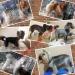 Продам стрижка собак