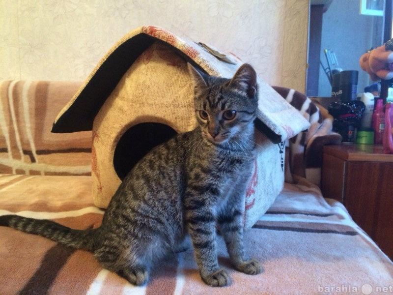 Отдам даром: Котенок приучен к лотку отдам бесплатно