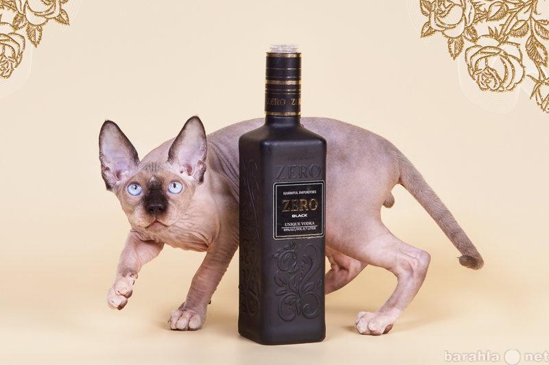 Продам Заворaживающий котёнок канадский сфинкс.