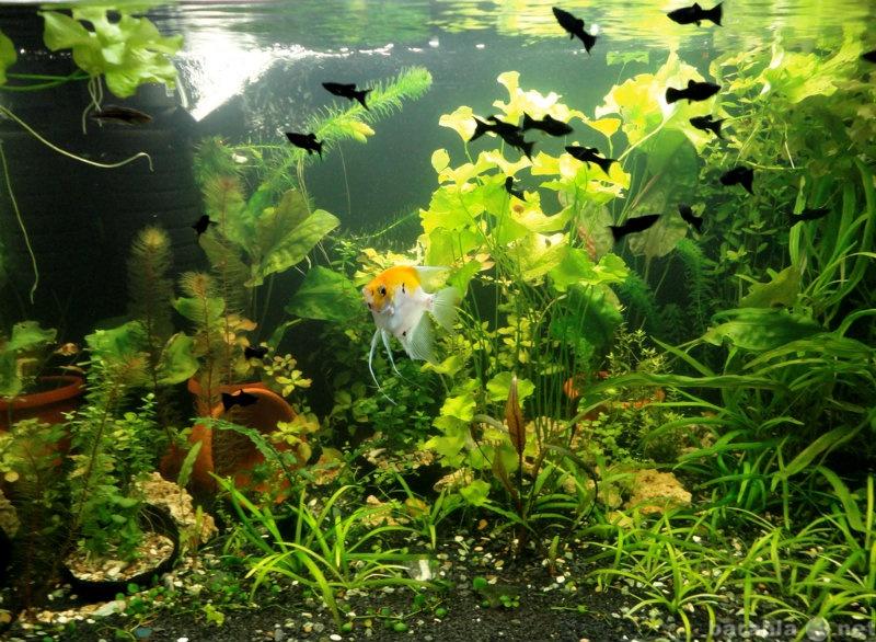 Продам Аквариумные рыбки и растения