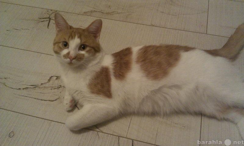 Приму в дар: Пропал рыжий  кот.  Вознаграждение !
