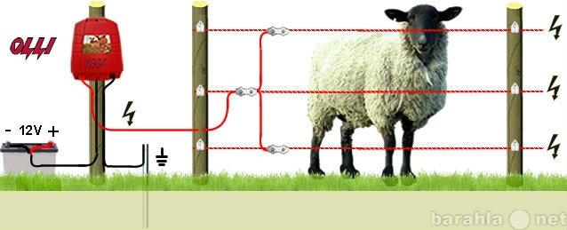 Продам Электропастух- для Овец в Краснодаре