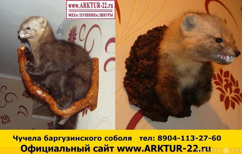 Предложение: Чучела баргузинского соболя