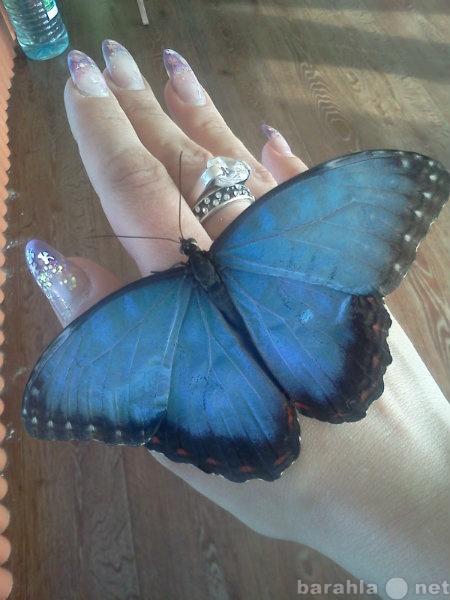 Продам живые тропические бабочки