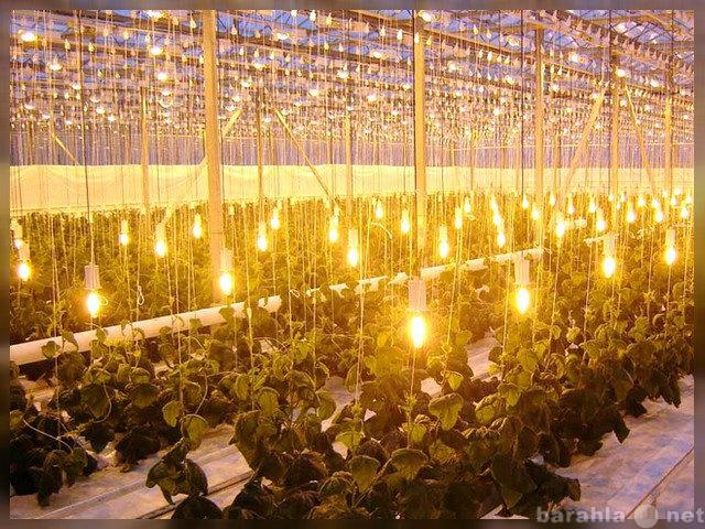 Продам: Тепличные светильники ЖСП 30, ДНаЗ, LED