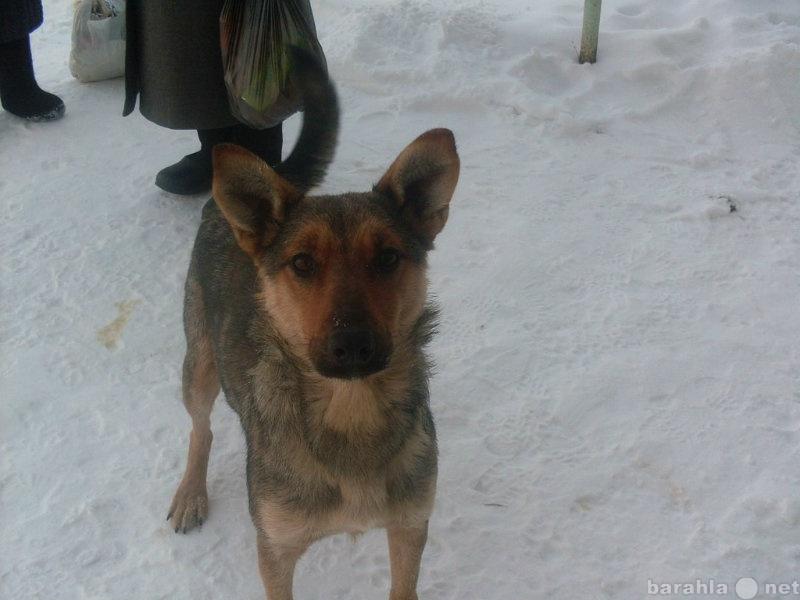 Отдам даром Собака ищет теплый дом и любящую семью