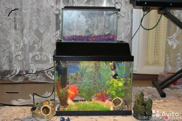 Продам Продаю аквариум со всеми принадлежностям