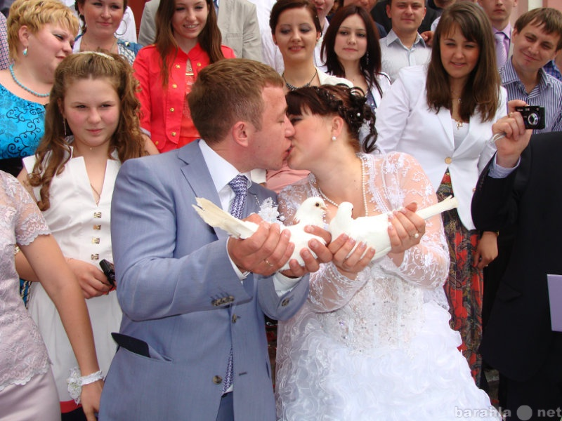 Продам: Голубей на свадьбу