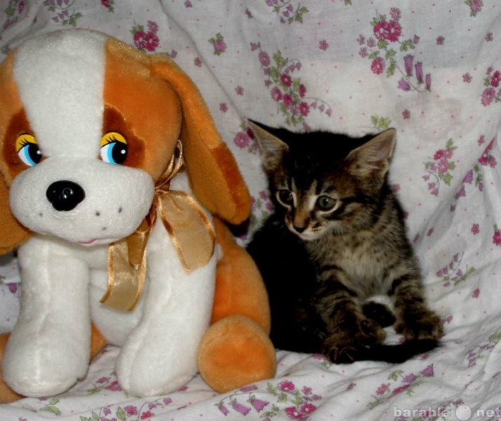 Отдам даром Маленький котик в хорошие руки.