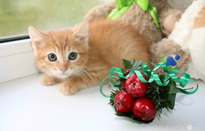 Отдам даром Рыжие котята ищут дом