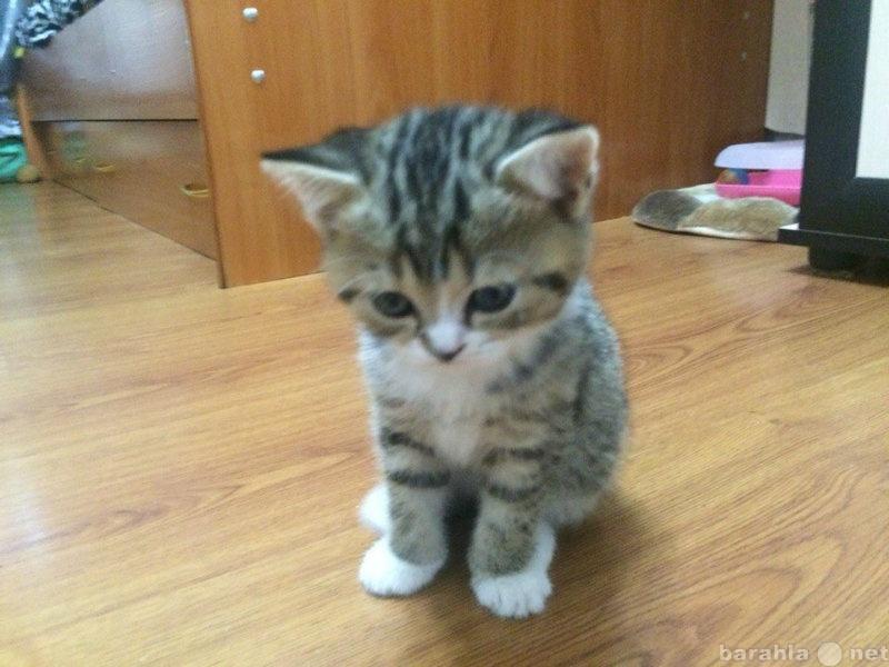 куплю котёнка в улан-удэ автобусов