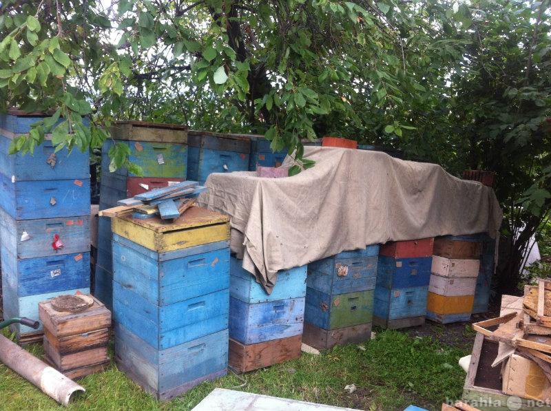 Купить ульи для пчел бу