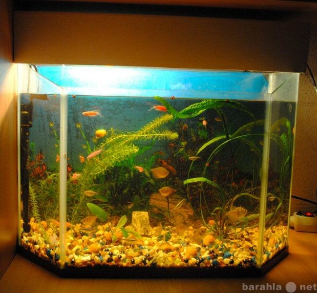Продам Продаю аквариум с рыбками и оборудование