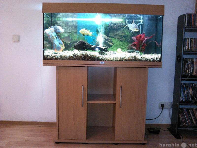 Продам аквариум с тумбой и рыбами
