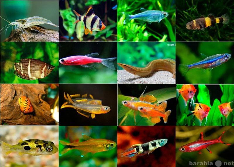 Продам Рыбки, креветки, улитки, растения