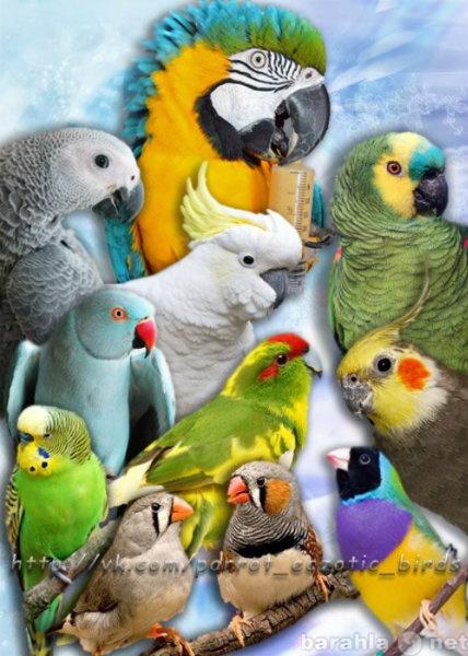 Куплю: Приютим вашу птичку и окружим заботой