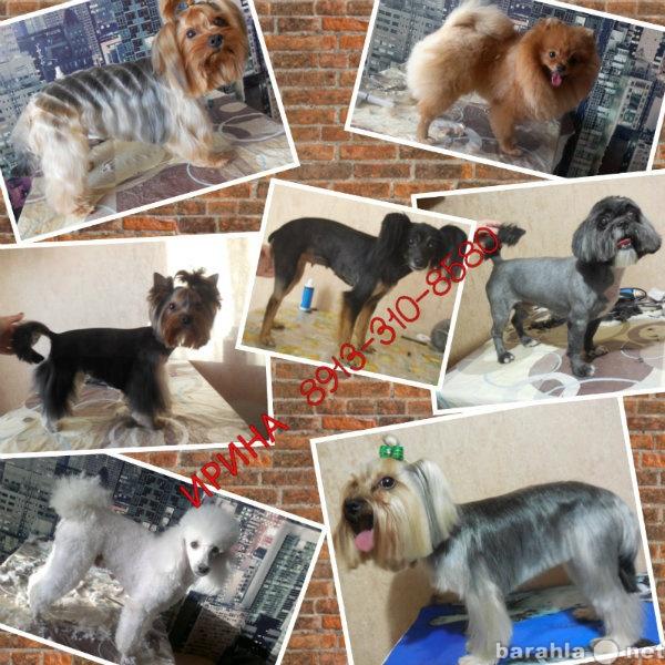 Продам стрижки собак( груминг )