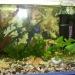Продам Живой аквариум