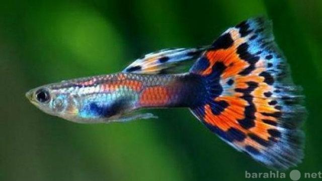 Продам мальков и взрослых аквариум. рыб