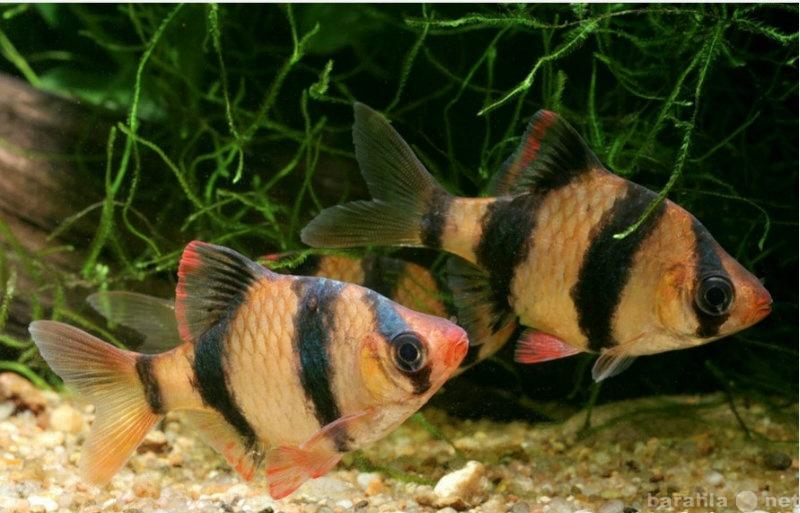 Продам: Аквариум 80л с рыбками