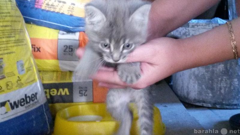Отдам даром Котик в добрые руки