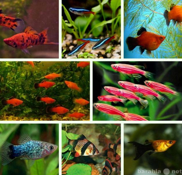 Продам Большой выбор аквариумных рыбок