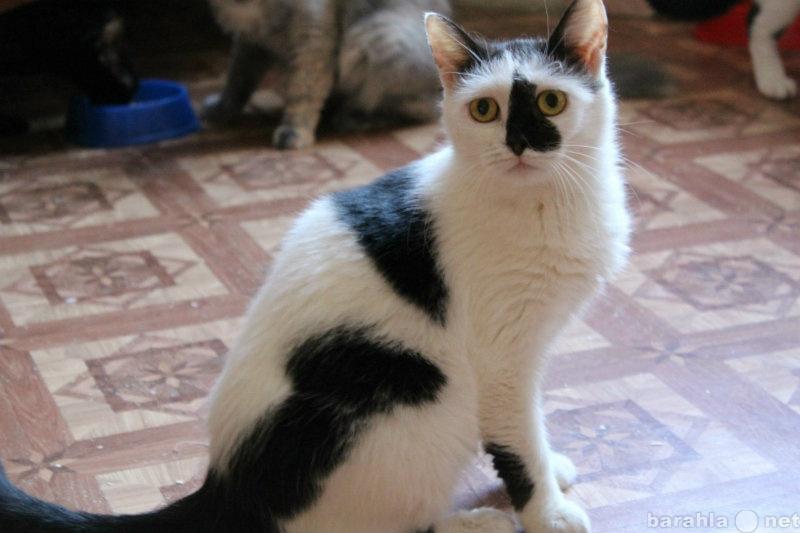 Отдам даром кошка из приюта