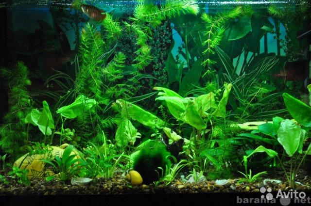 Продам Аквариум + рыбки
