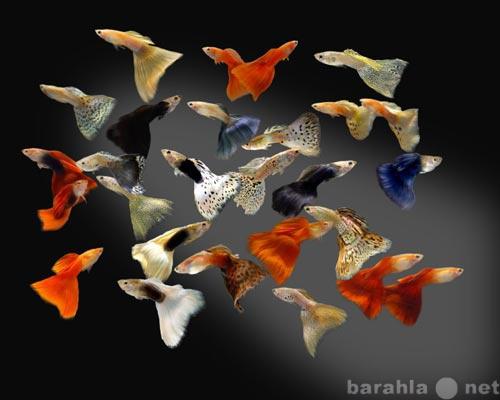 Приму в дар Приму мирных аквариумных рыбок, растения