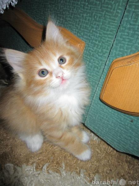 Отдам даром котятки