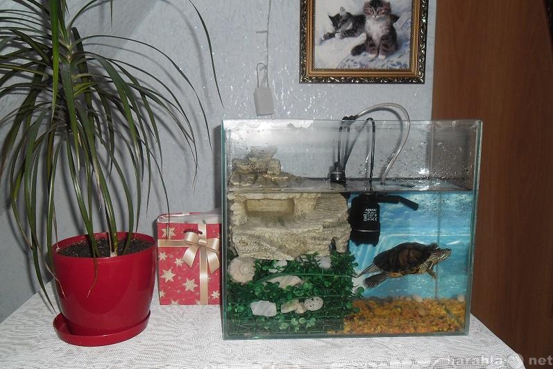 Продам Черепаха с аквариумом