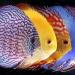 Продам Товары для аквариумистики
