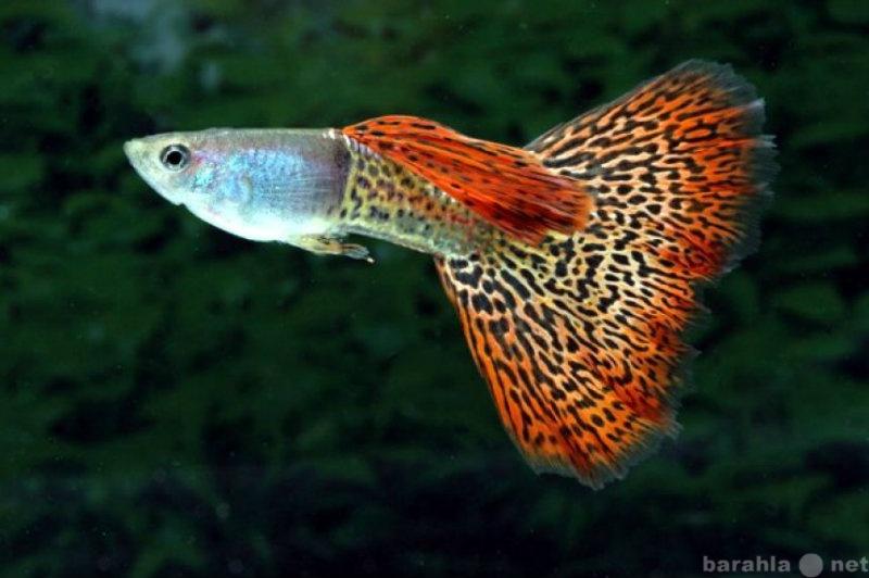 Продам Рыбки
